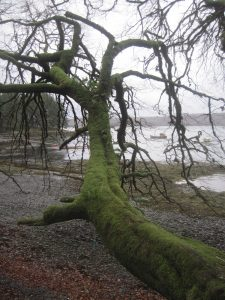 Walking Loch Creran.