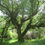 Lessons From A Tree, Part 5 – Wounds