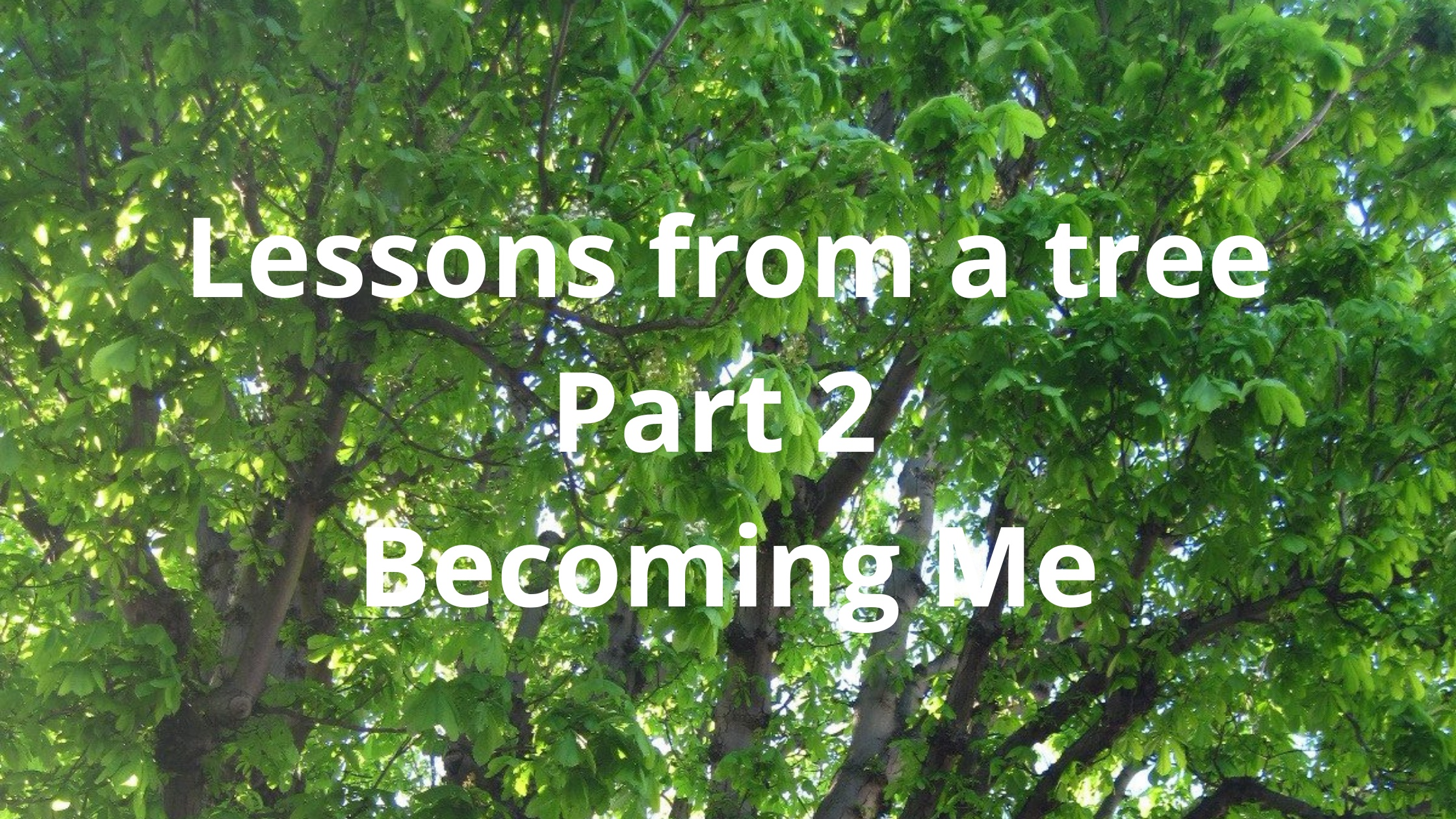 lessons form a tree
